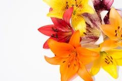 Flores frescas hermosas Dulzura y olor agradable Lirios del jardín imagen de archivo