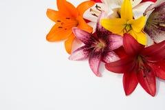 Flores frescas hermosas Dulzura y olor agradable Lirios del jardín imagen de archivo libre de regalías