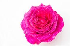 Flores frescas hermosas Dulzura y olor agradable Rosas del jardín imagen de archivo