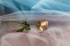 Flores frescas no rosa azul da tela Imagem de Stock Royalty Free