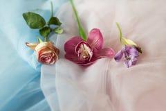 Flores frescas no rosa azul da tela Fotografia de Stock Royalty Free
