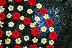 Flores frescas que flotan en superficie oscura del agua imágenes de archivo libres de regalías