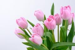 Flores frescas rosadas de los tulipanes Foto de archivo libre de regalías
