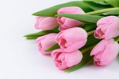 Flores frescas rosadas de los tulipanes Foto de archivo