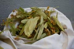 Flores frescas y hojas del tilo Flores secadas del tilo fotografía de archivo