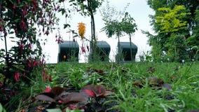 Flores fucsias en el árbol Fotografía de archivo libre de regalías