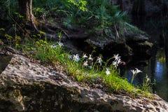Flores fuera de la roca Foto de archivo