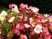 Flores Fundo floral bonito Grupo de flores Imagens de Stock
