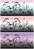 Flores, grama e borboleta do prado no alvorecer Fotos de Stock