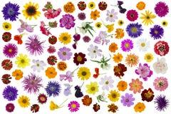 Flores grandes ajustadas isoladas Fotos de Stock Royalty Free