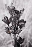 Flores Greyscale imagenes de archivo