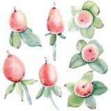 Flores Handpainted da aquarela ajustadas no estilo do vintage Imagens de Stock Royalty Free