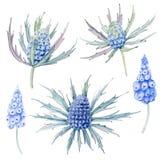 Flores Handpainted da aquarela ajustadas no estilo do vintage Imagem de Stock