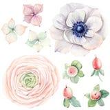 Flores Handpainted da aquarela ajustadas no estilo do vintage Fotos de Stock