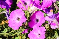 Flores hechas en casa Foto de archivo libre de regalías