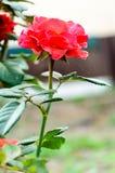 Flores hechas en casa Fotografía de archivo