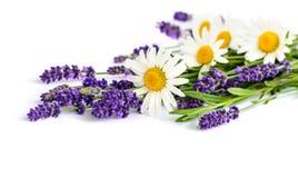 Flores herbarias en el fondo blanco Imagenes de archivo