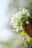 Flores hermosas Foto de archivo libre de regalías