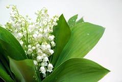 Flores hermosas Fotografía de archivo