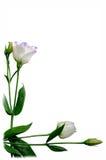 Flores hermosas Imagenes de archivo