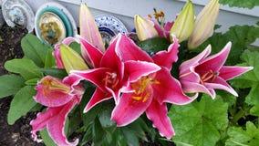 Flores hermosas fotografía de archivo libre de regalías