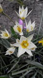 Flores hermosas Fotos de archivo