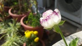 Flores hermosas Imagen de archivo libre de regalías