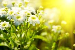 Flores hermosas blancas Fotografía de archivo libre de regalías