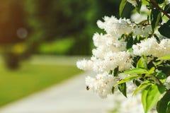 Flores hermosas blancas en fondo de la naturaleza Imagen de archivo