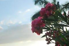 Flores hermosas, capturadas en una zona rural del ‹del †del ‹del †la provincia de Panamá ³ n de Valle de Antà Imágenes de archivo libres de regalías