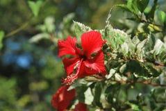 Flores hermosas, capturadas en una zona rural del ‹del †del ‹del †la provincia de Panamá Fotos de archivo libres de regalías