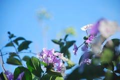 Flores hermosas, capturadas en una zona rural del ‹del †del ‹del †la provincia de Panamá Imagenes de archivo