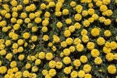 Flores hermosas como fondo fotografía de archivo