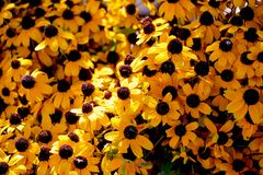 Flores hermosas como fondo imágenes de archivo libres de regalías