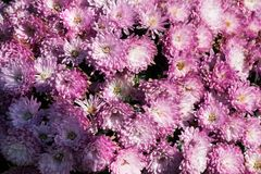 Flores hermosas como fondo foto de archivo