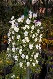 Flores hermosas como fondo fotografía de archivo libre de regalías