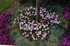 Flores hermosas como fondo imagen de archivo libre de regalías