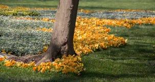 Flores hermosas como fondo fotos de archivo libres de regalías