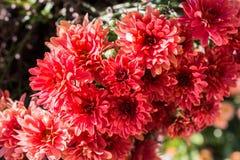 Flores hermosas como fondo foto de archivo libre de regalías