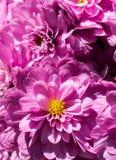 Flores hermosas como fondo imagenes de archivo