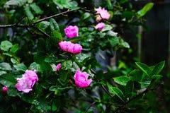 Flores hermosas con descensos en las hojas Fotos de archivo