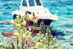 Flores hermosas de la fresia y poco barco en Maslinica, Solta Imagenes de archivo