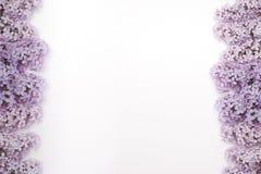 Flores hermosas de la lila Aislado en el fondo blanco fotografía de archivo libre de regalías