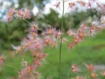 Flores hermosas de la mala hierba Imágenes de archivo libres de regalías