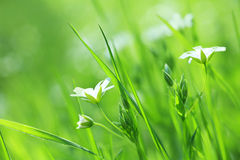 Flores hermosas de la margarita Imagen de archivo libre de regalías