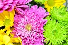 Flores hermosas de la margarita en verano Fotos de archivo