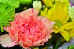 Flores hermosas de la margarita en verano Imagen de archivo