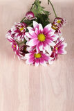 Flores hermosas de la momia en fondo de madera Fotografía de archivo libre de regalías