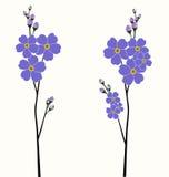Flores hermosas de la nomeolvides Imagen de archivo libre de regalías