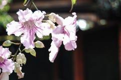 Flores hermosas de la orquídea con el fondo borroso Foto de archivo libre de regalías